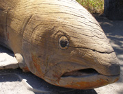 Indomitable Salmon carved wood sculpture by Floyd Davis
